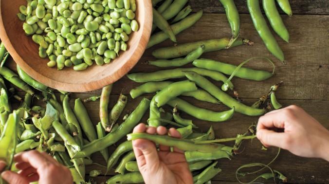 fava-beans-md108648_horiz