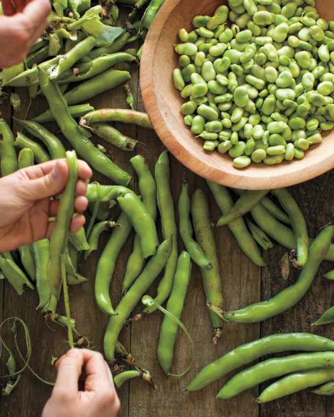 fava-beans-md108648_vert